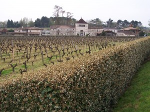 BordeauxVineyardsChateau