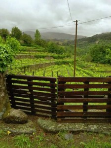 Misty rolling hills are home to Vinho Verde white wine varietals