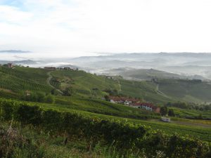 Barolo vineyards Sep 2012 fog
