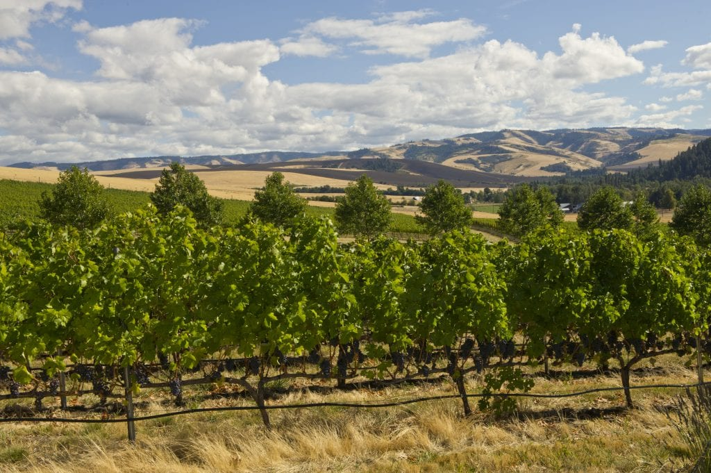 Figgins Estate Vineyard Walla Walla Washington